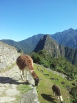Machu Picchu, Where else?